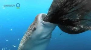 potapljaci-posneli-morskega-psa