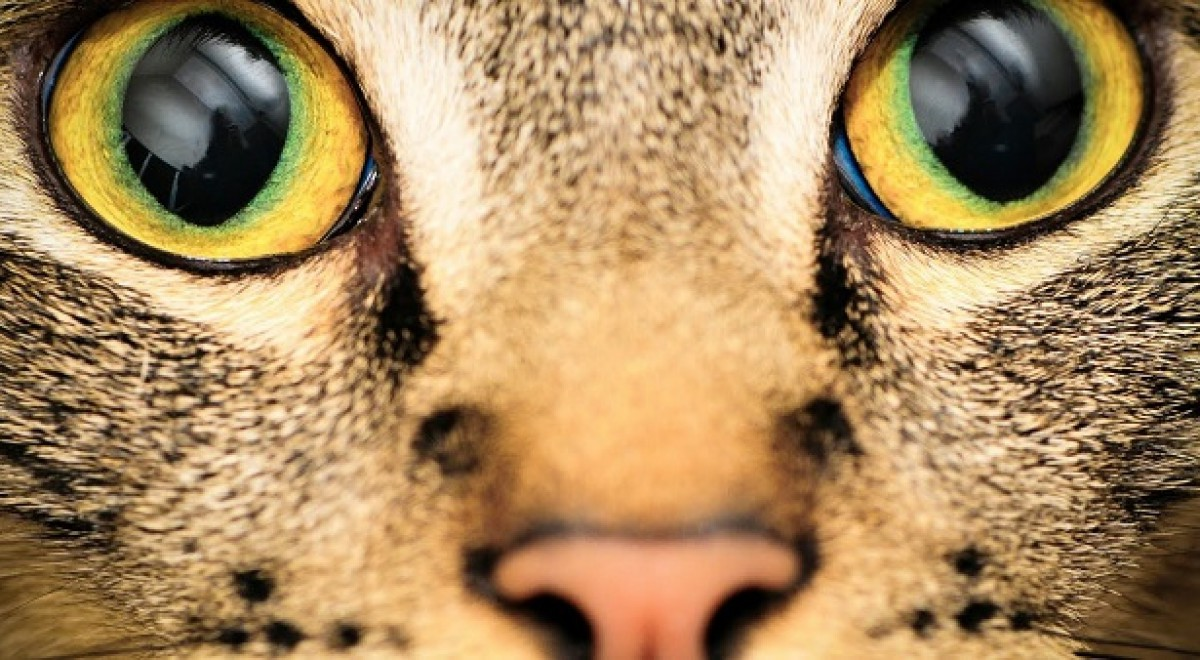 kako živali vidijo svet okoli sebe