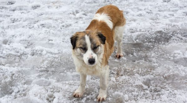 Homeless dog on the white snow. Pets, Image: 273231958, License: Royalty-free, Restrictions: , Model Release: no, Credit line: Profimedia, Stock Budget