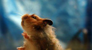 mišja mrzlica v sloveniji