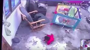 mačka rešila dojenčka pred padcem