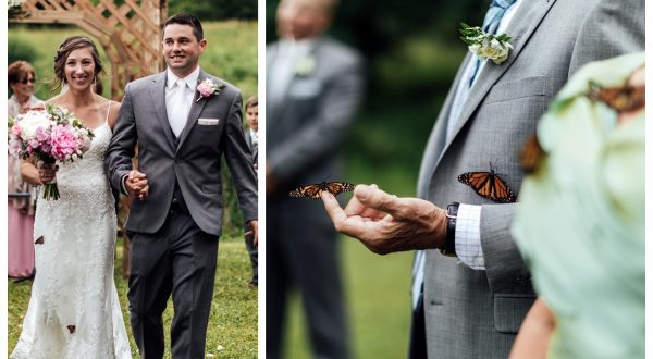 poroka metulji