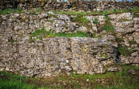 Mnogi so se pošteno namučili s tem izzivom: Ali lahko na fotografiji najdete sovo?