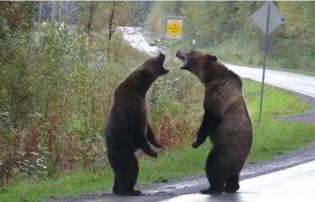 Redek posnetek boja med medvedoma postal hit, številne je navdušil tudi detajl v ozadju