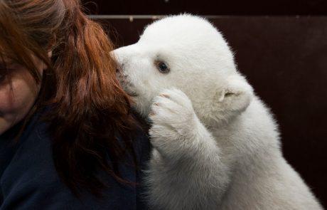 Berlinčani žalostni zaradi smrti polarnega medvedka Fritza