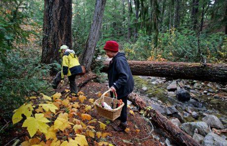 Ob nabiranju gozdnih plodov skrbno ravnajmo z gozdom