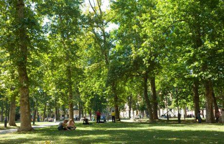 Ljubljana znova prepoznana kot svetovno mesto dreves