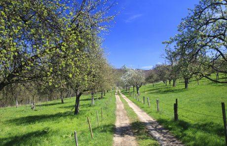 Travniški sadovnjaki so priložnost za revitalizacijo podeželja