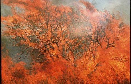 Gasilci v Avstraliji, ki so jo zajeli številni obsežni požari, svarijo, da najhujše šele prihaja