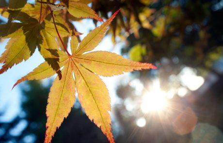 Vreme: Danes in v petek bo sončno