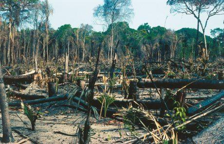 Človeštvo se očitno ne more več zanašati na svoj največji tropski gozd, da bo posrkal njegove škodljive izpuste CO2