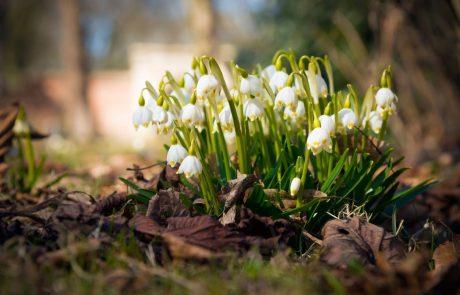 Začetek meteorološke pomladi sončen, minula zima nadpovprečno topla
