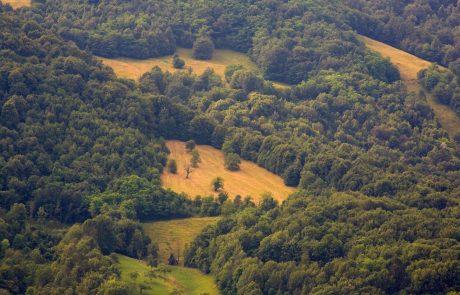 Slovenija in Kitajska krepita sodelovanje na področju gozdarstva