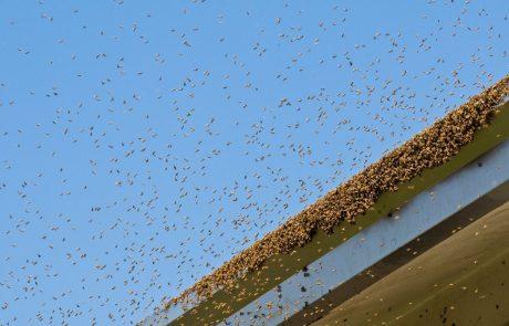 Jezne čebele, ki so napadle letališko osebje, botrovale zamudi letala