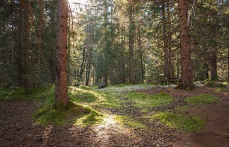 Slovenski gozdovi so močno ogroženi