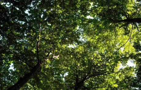 V Sloveniji lani posekali 6,1 milijona kubičnih metrov lesa