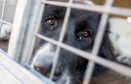 Na Otoku vse več ugrabitev psov in mačk, vlada napovedala ukrepanje