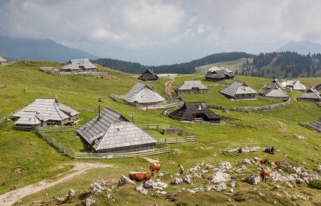 Na Veliki planini bosta letos krave pasla znana Slovenca