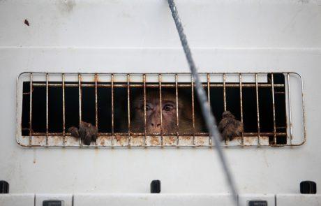 """Končno zaprli """"najslabši živalski vrt"""" na svetu in živali preselili v boljše pogoje"""