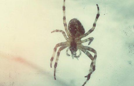 Poznate koga, ki se na smrt boji pajkov?