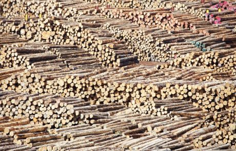 Slovenija z zapostavljanjem lesarstva v zadnjih desetletjih ob skoraj 10 milijard evrov