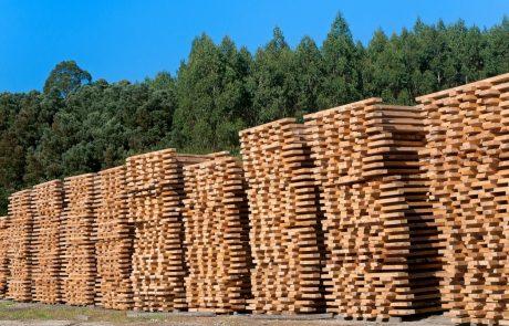"""""""Slovenija ima največji letni prirast lesa na prebivalca v Evropi, a je po predelavi lesa na repu"""""""