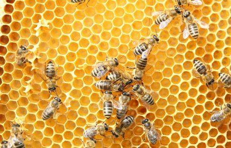 Zapornike na odprtem oddelku ižanskega zapora učijo čebelariti
