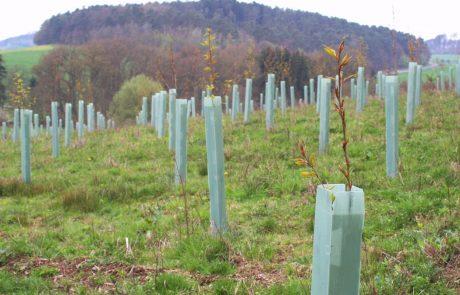 V Črni na Koroškem bodo posadili več kot 7000 dreves