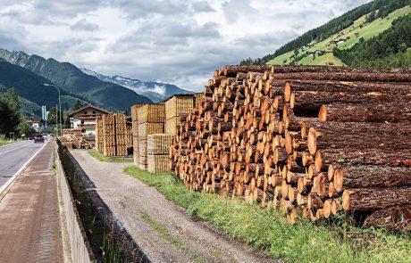 Slovenskim žagarjem primanjkuje lesa, ker hlodovino prodajamo v tujino