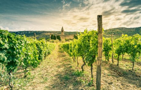 Hrvaška od evropske komisije zaprosila za zaščito vina prošek, Italijo ta prošnja pošteno razjezila
