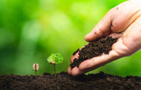 Kavna usedlina kot čudežna, naravna pomoč pri vrtnarjenju!