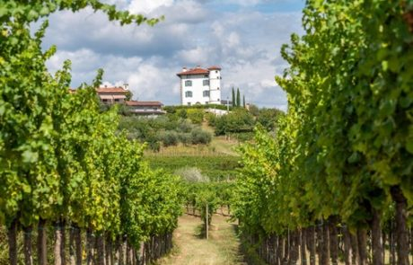V Goriških Brdih zaključujejo s trgatvijo, grozdje letos izjemno kvalitetno in zdravo