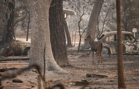 Na severu Kalifornije že skoraj popolnoma omejili uničujoči požar