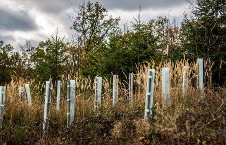Bliža se vseslovenska prostovoljska akcija pomlajevanja gozdov
