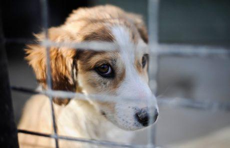 V Kaliforniji v trgovinah z ljubljenčki odslej le še rešene živali