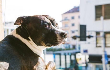 Na Dunaju obvezni tečaji za bodoče lastnike psov, ne glede na pasmo