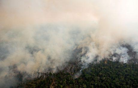 Vsako leto zgori za pol Slovenije amazonskega gozda
