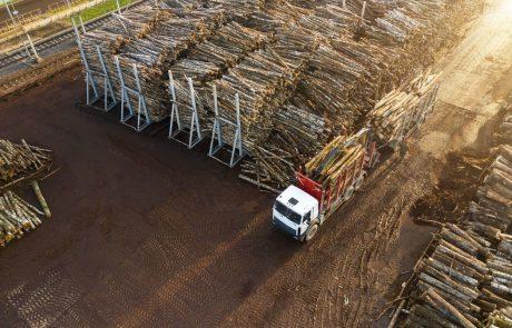 Škoti niso opustili načrtov za velik lesnopredelovalni obrat v Sloveniji