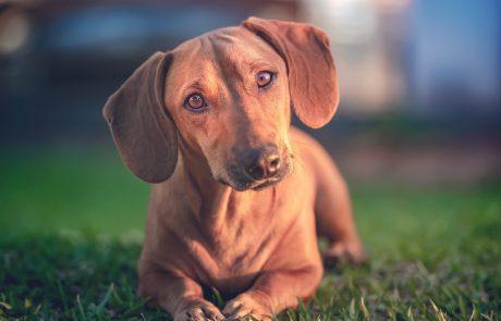 Posvojite prijatelja: Pomagajte živalim iz zavetišč hitreje najti nov dom