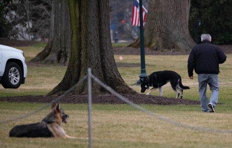 Problematični Bidnov pes Major bo moral zaradi ugrizov na posebni trening